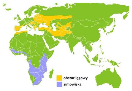 populacja-swiatowa