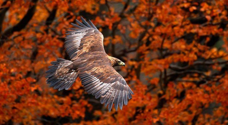 eagle_na_www
