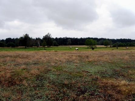 ekstensywne_pastwiska_-_ulubione_siedlisko_kraski_-_kopia