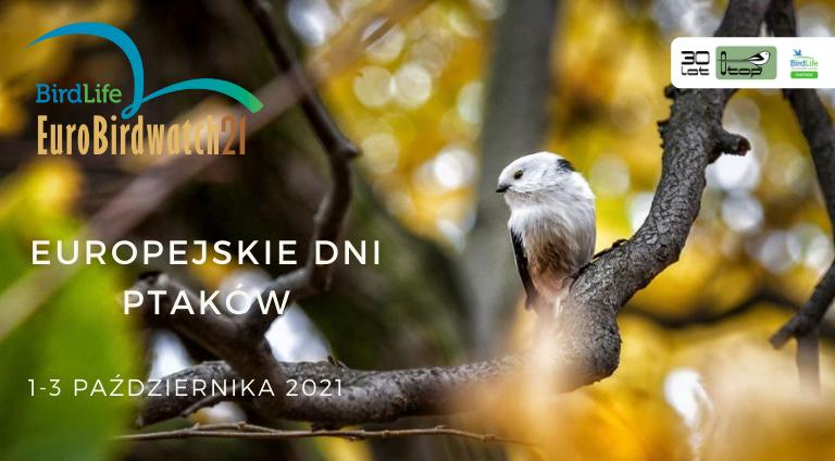 Europejskie Dni Ptaków | 1–3 października 2021 - OTOP